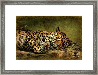 Wake Up Sleepyhead Framed Print