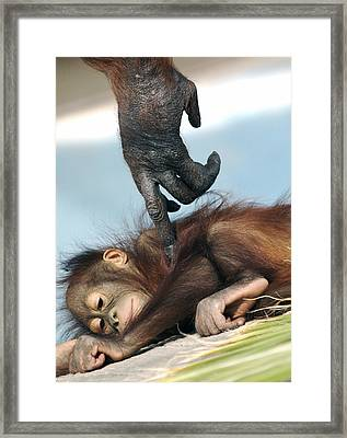 Wakeup Little One Framed Print by Sue Cullumber