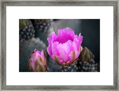 Waking Framed Print