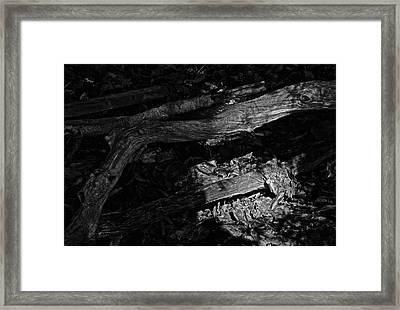 Waking The Dead Framed Print by Odd Jeppesen