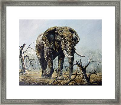 Walk About Framed Print