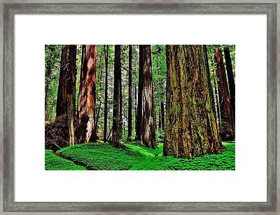 Walk Among Giants Framed Print
