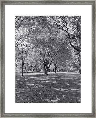 Walk In The Park Framed Print by Kim Hojnacki