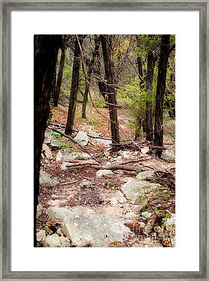 Walk In The Woods Framed Print by Barbara Shallue