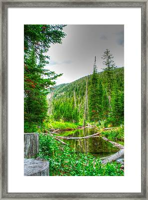Framed Print featuring the photograph Walk In The Woods by Kevin Bone