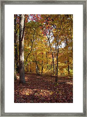 Walk In The Woods - Vertical Framed Print