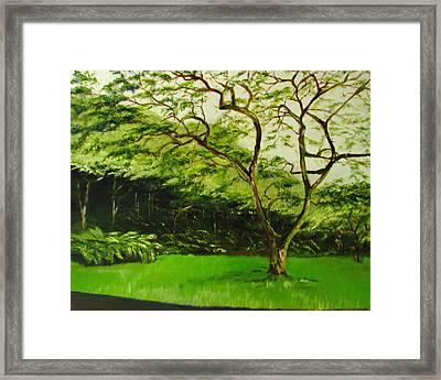 Walk In Waimea Valley Framed Print by Sherry Robinson