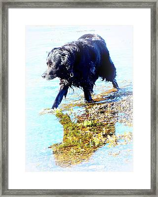 You Walk Into The Still Water Framed Print