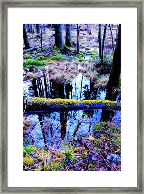 Walk Right Into The Nature's Fairytale With Me  Framed Print by Hilde Widerberg