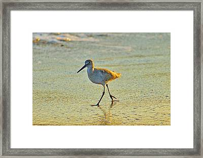 Framed Print featuring the photograph Walk On The Beach by Cynthia Guinn