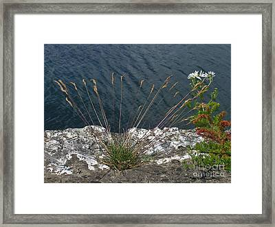Framed Print featuring the photograph Flowers In Rock by Brenda Brown