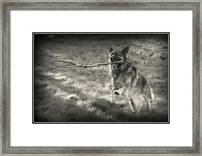 Walk Softly But Carry A Big Stick Framed Print by Sue Long