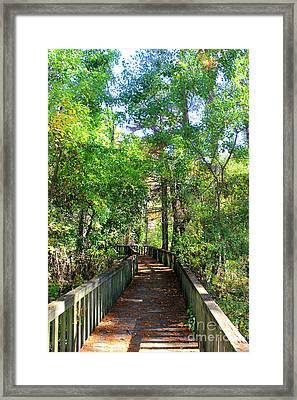 Walk This Way Framed Print by Kathy  White