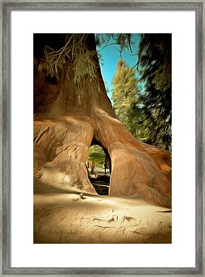 Walk Through Giant Sequoia Tree Framed Print by Barbara Snyder