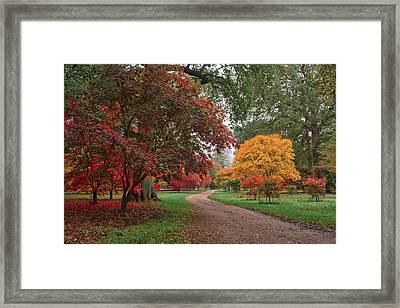 Walk Through The Colours.  Framed Print by Shirley Mitchell
