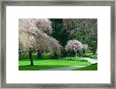 Walk Under The Cherry Blossoms Framed Print by Sabine Edrissi