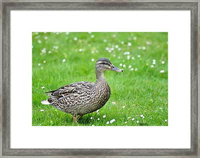 Walk With Me Framed Print by Kathy King
