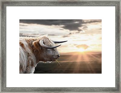 Walker The Highlander Framed Print