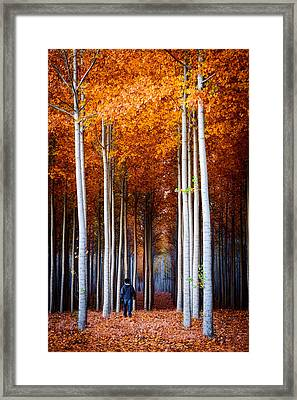Walking Among Giants Framed Print by Dan Mihai