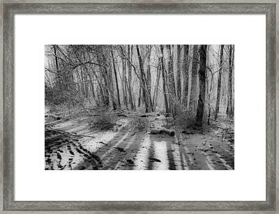 Walking  Amongst Shadows Framed Print by Thomas  MacPherson Jr