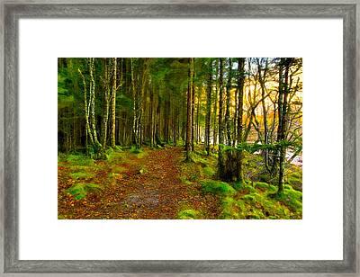 Walking In A Scottish Highland Wood Framed Print