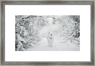 Walking In A Winter Wonderland Framed Print