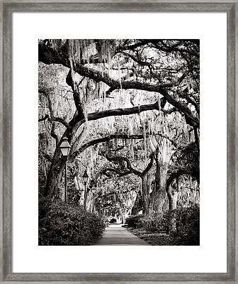 Walking In Forsyth Park In Black And White Framed Print