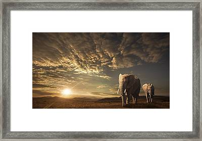 Walking In Savannah Framed Print by Jackson Carvalho
