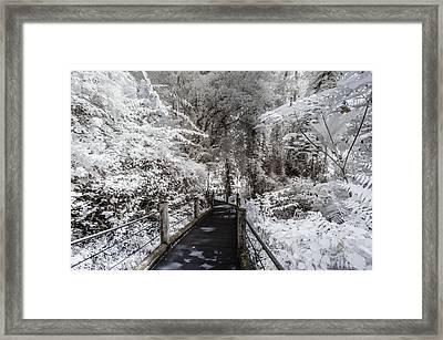 Walking Into The Infrared Jungle 1 Framed Print
