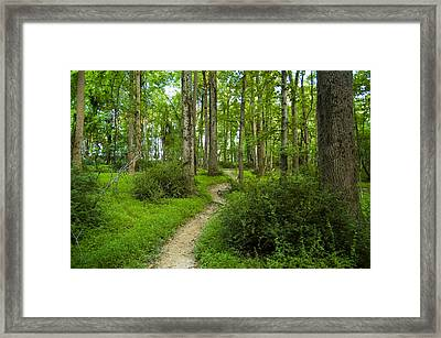 Walking My Art Framed Print