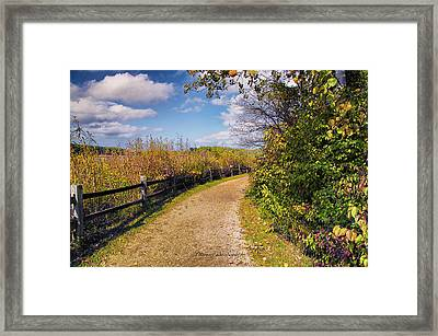 Walking On Sunshine Framed Print by Thomas Woolworth