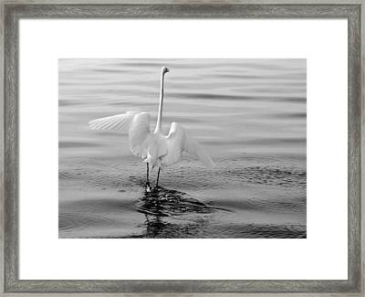 Framed Print featuring the photograph Walking On Water by Daniel Woodrum