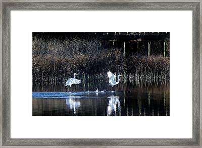 Walking On Water Framed Print by Paulette Thomas