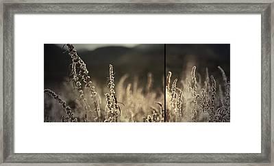 Walking On Wind Framed Print by Mark  Ross