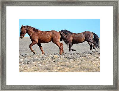 Walking Tall Framed Print