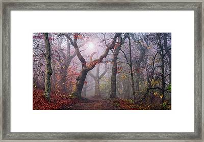 Walking The Old Path. Framed Print