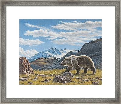 Walking The Ridge - Grizzly Framed Print
