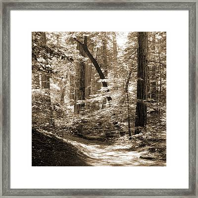 Walking Through The Redwoods Framed Print by Mike McGlothlen