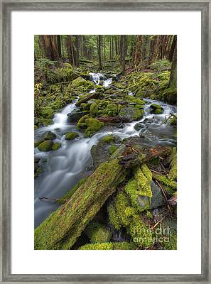 Walking To Sol Duc Framed Print by Marco Crupi