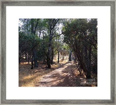 Walking Trail Framed Print