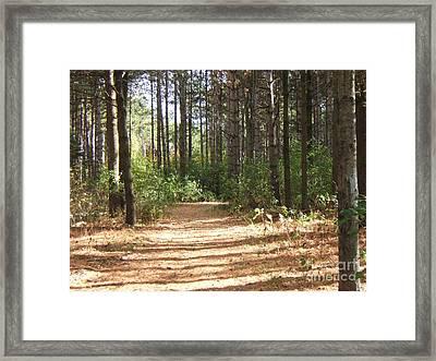 Walking Trail Framed Print by Margaret McDermott
