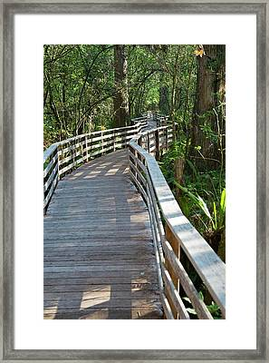 Walkway In A Nature Reserve Framed Print