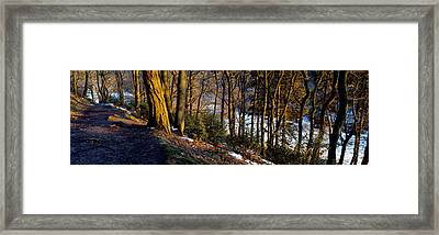 Walkway Passing Through The Forest Framed Print by Panoramic Images