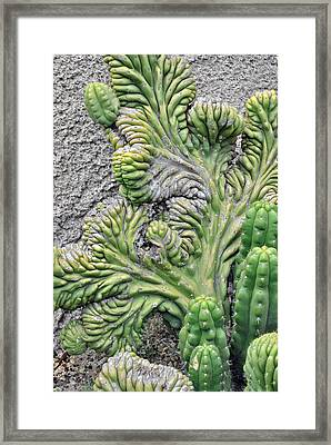 Wall Cactus Framed Print by Misty Stach