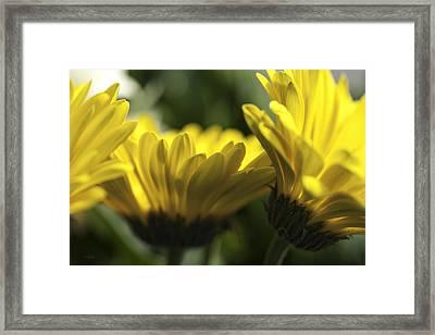 Wall Flowers Framed Print by Fran Riley