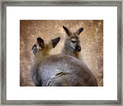 Wallabies Framed Print by Ellen Heaverlo