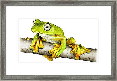 Wallaces Flying Frog Framed Print by Roger Hall
