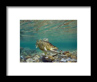 Angling Art Framed Prints