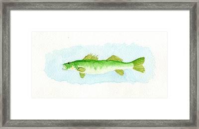 Walleye Framed Print by Dan  Orapello