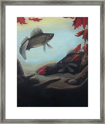 Walleye Fall 2 Framed Print by Kimberly Benedict